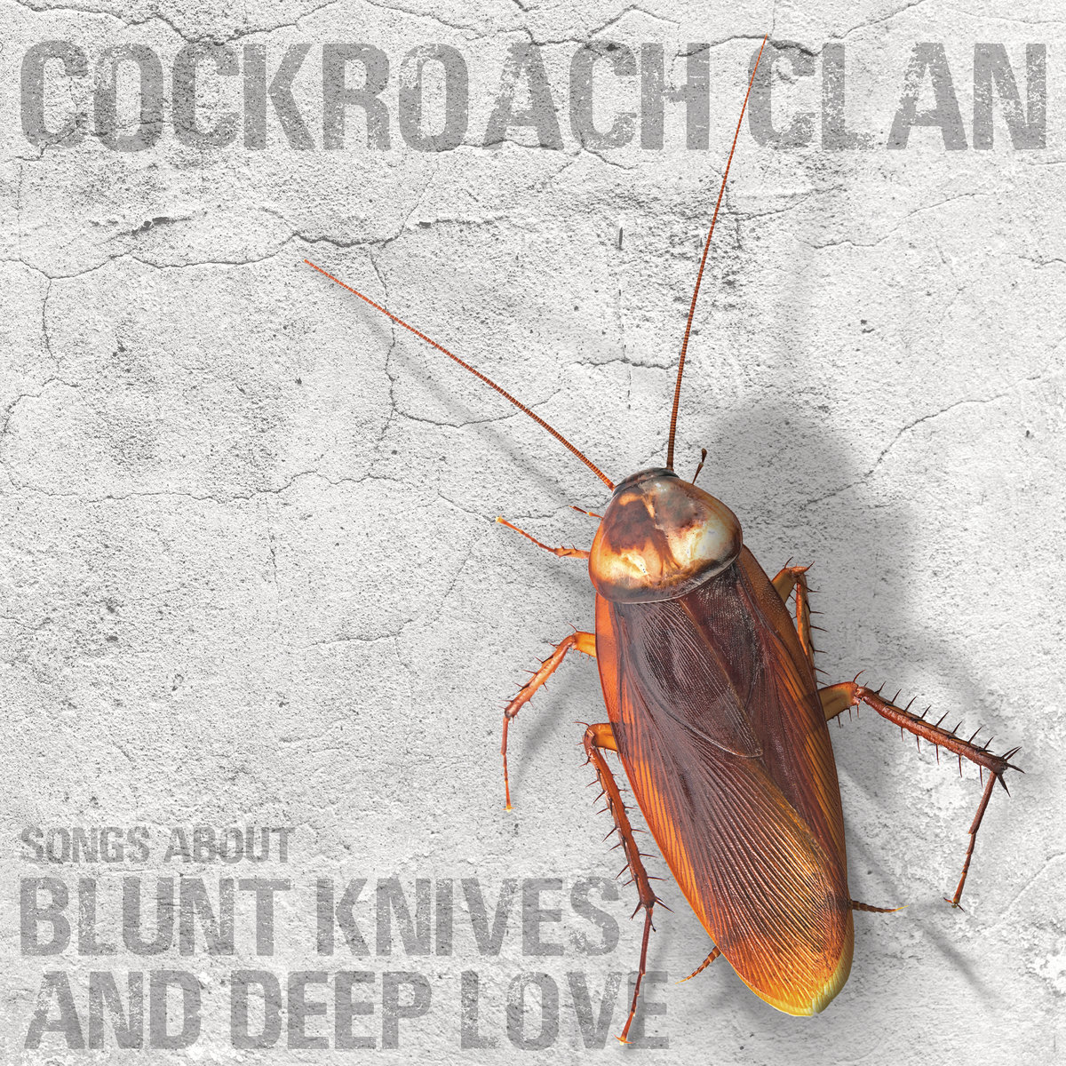 COCKROACH CLAN cover